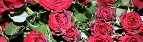 Ruusuja äideille ja voitto Tarvasjoelle
